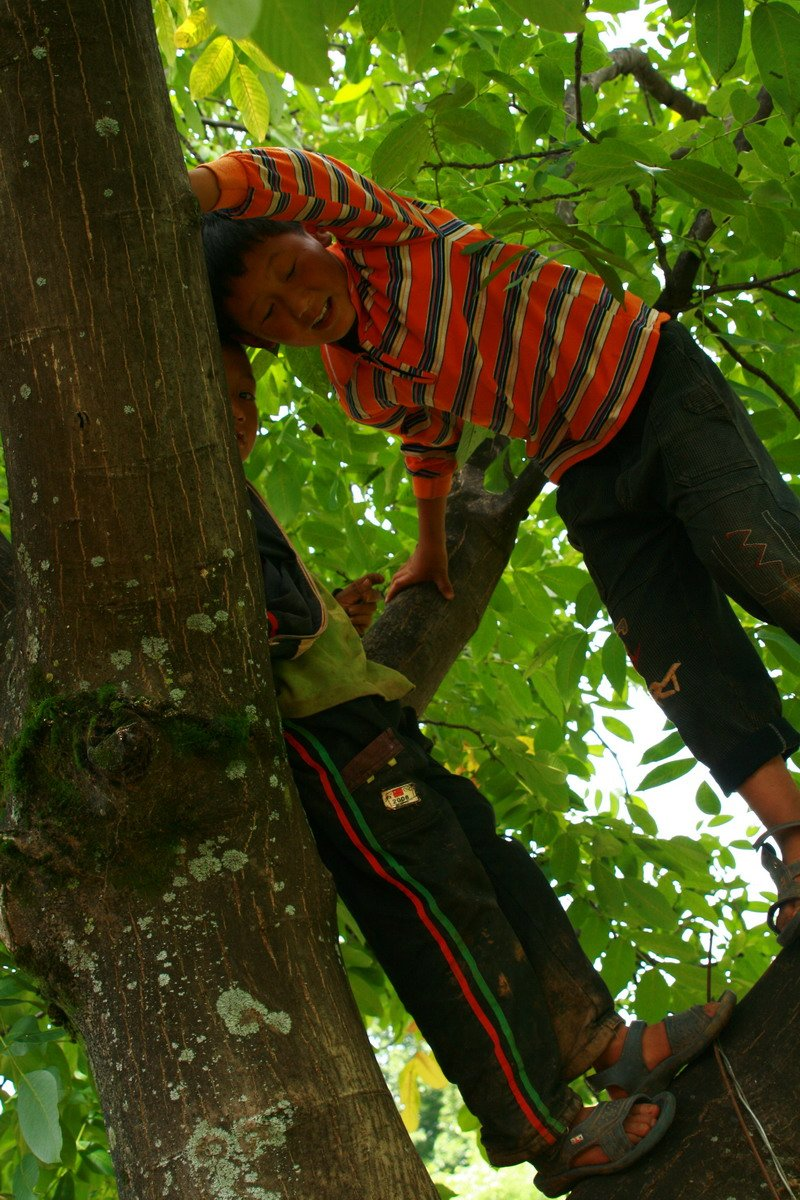 boyintree2.jpg